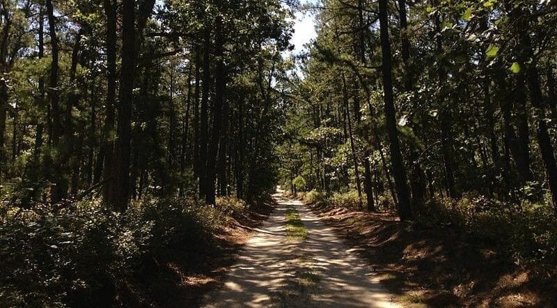 Wharton State Forest