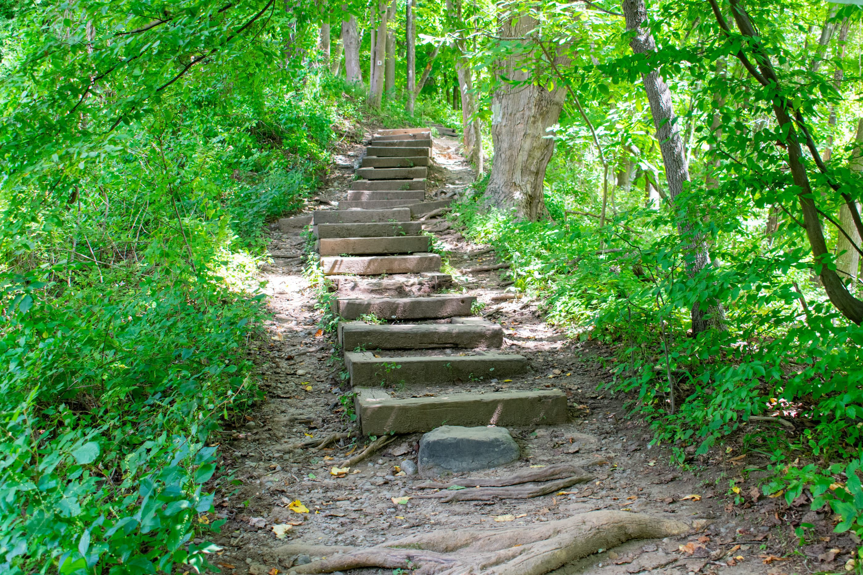 Stairs Leading to Kittatiny Mountains Trail